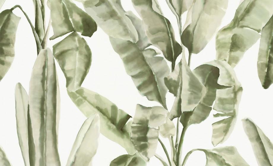 bananito-jade-1500x937