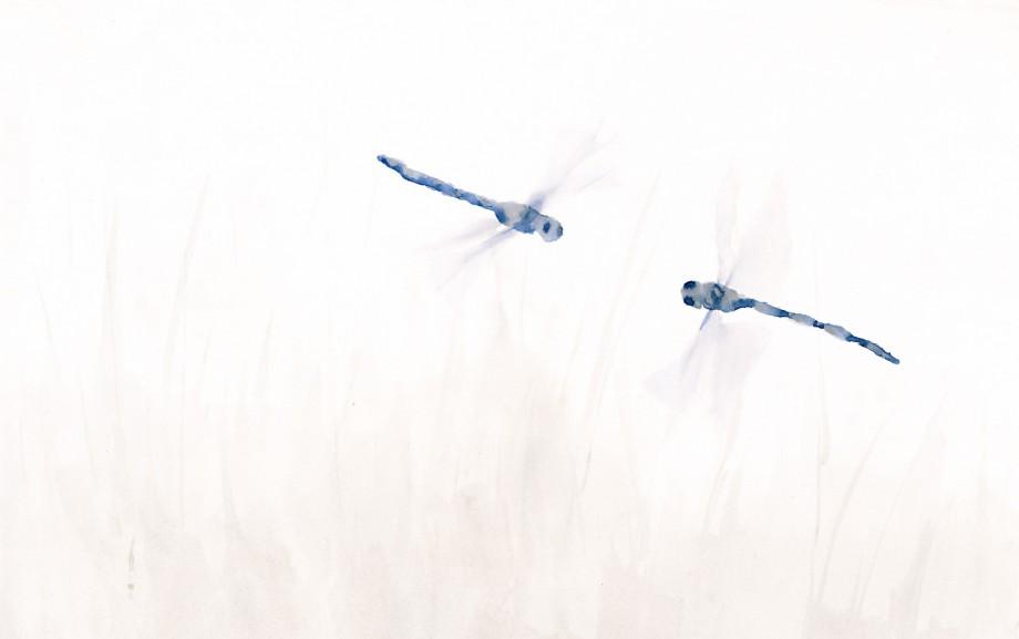 libelula-blue-1500x940