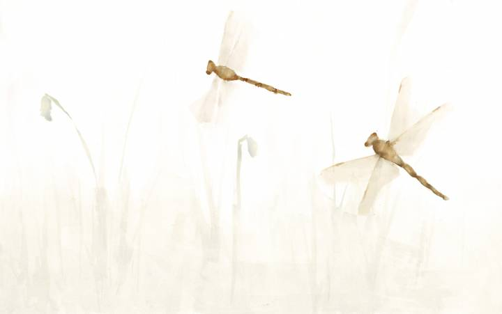 libelula - papel pintado a mano color