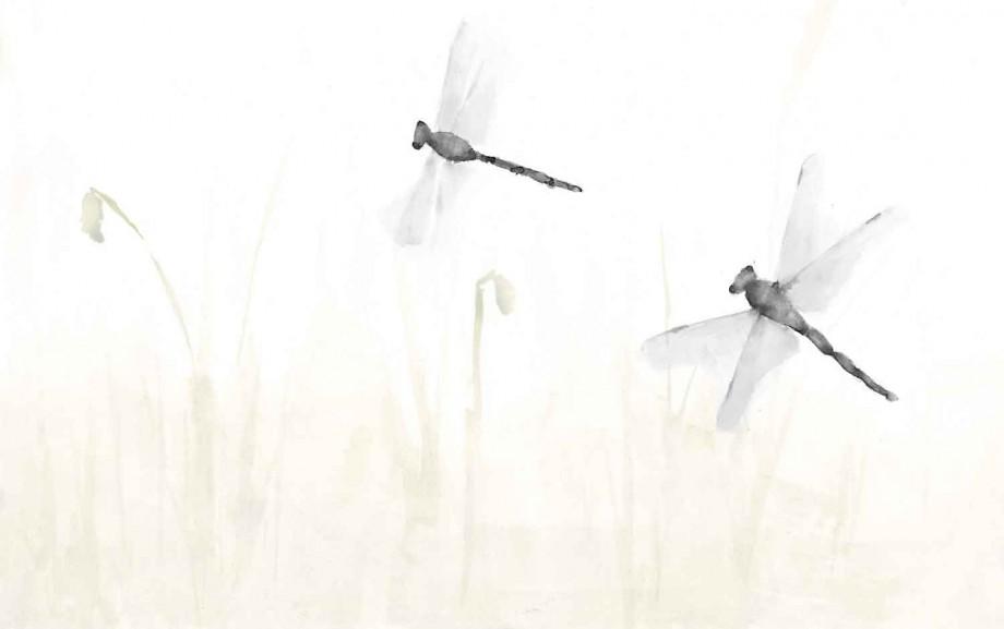 libelula-grey-1500x940