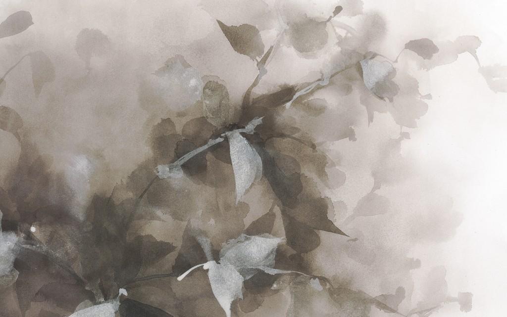 bauinia-Gris-platas